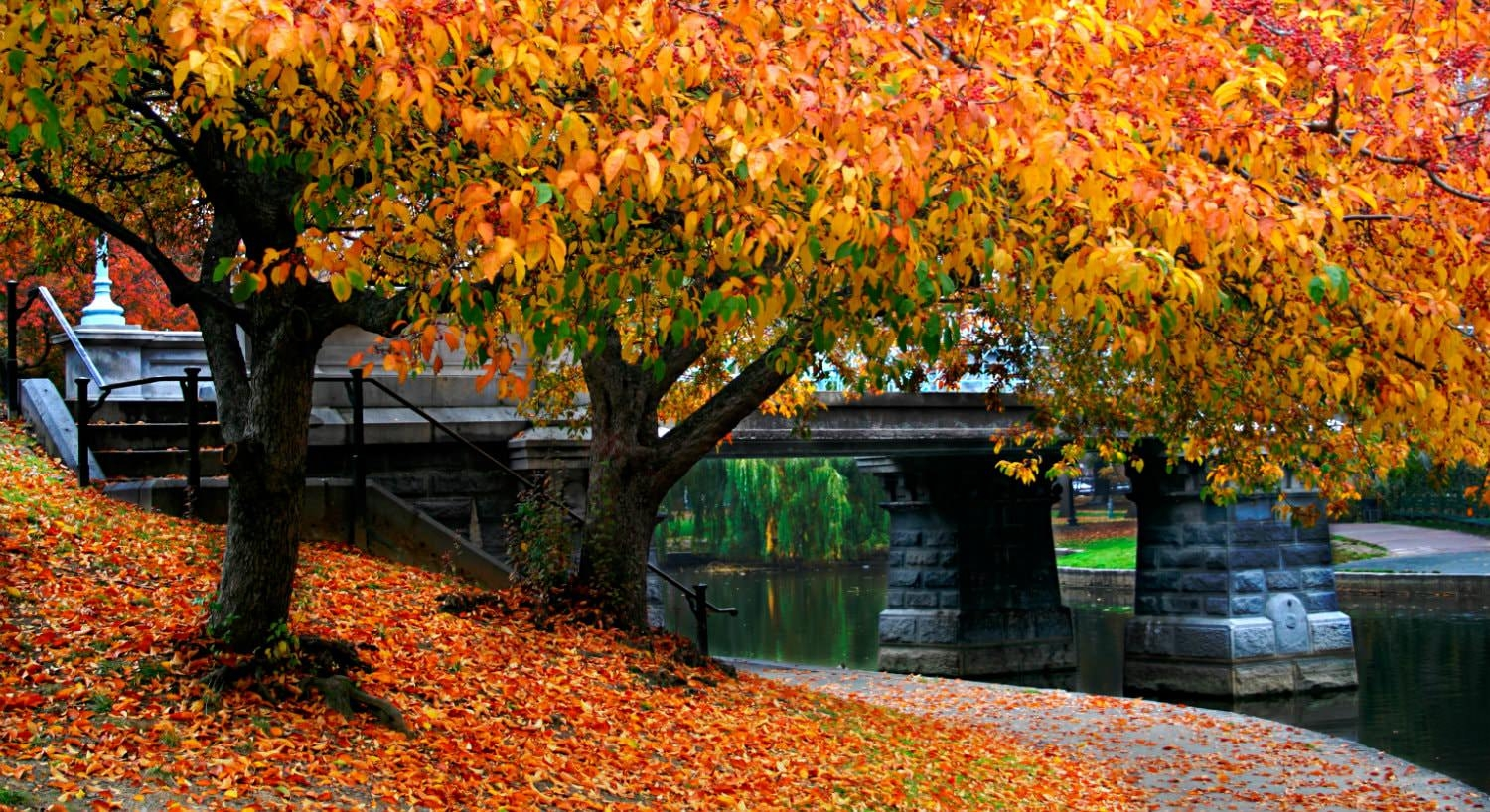 Vibrant trees along a river bank with yellow, orange, red and green leaves