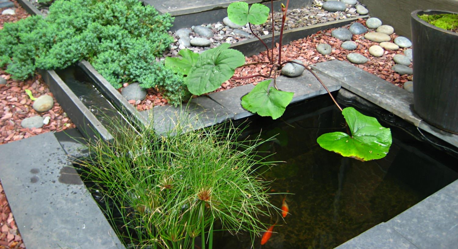Small slate koi pond with green lili pad surrounded by grey and clay colored stones