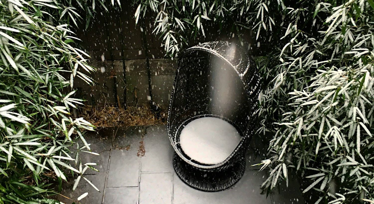 Snow falling on a black cacoon patio chair and nearby plants