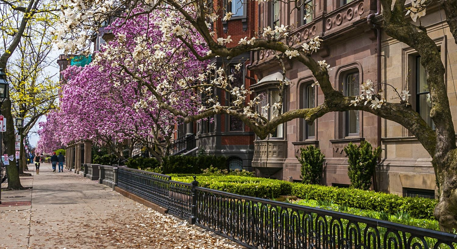 sidewalk next to a row of brownstones with black iron railings and purple and white flowering trees
