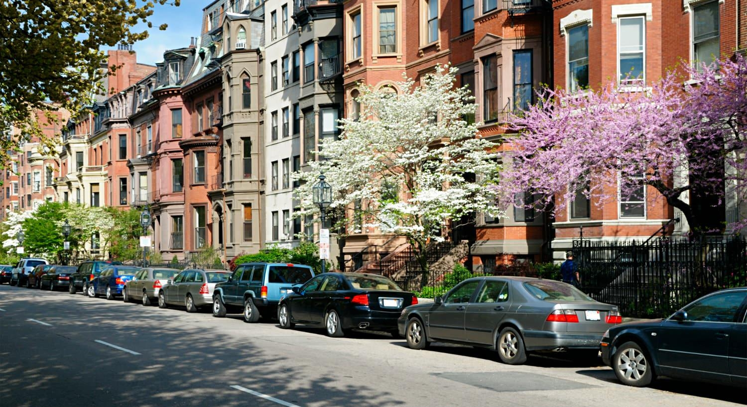 Row of different colored brownstones on a street with parked cars and purple and white flowering trees