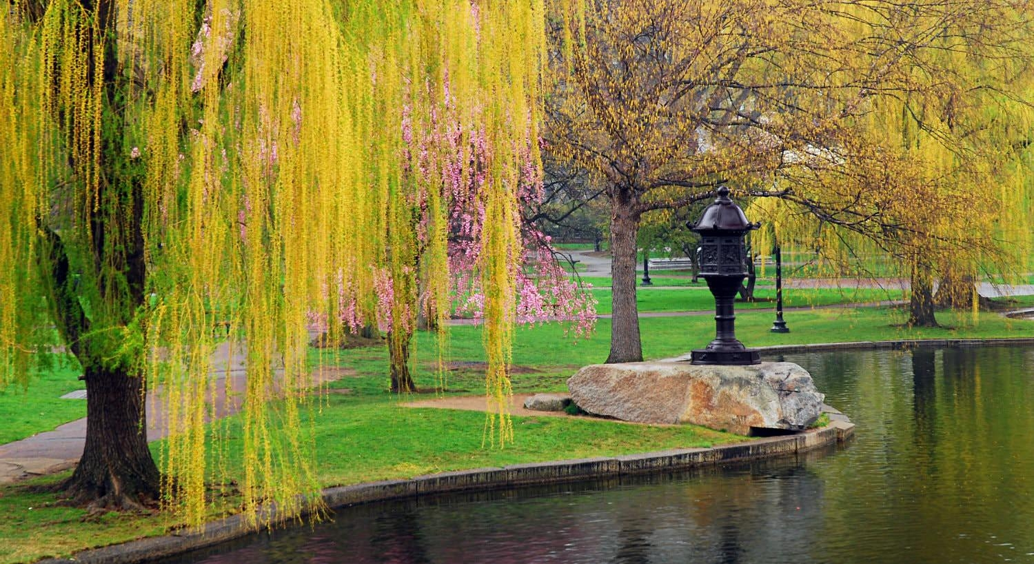 Beautiful park with trees budding with pink flowers and yellow leaves along body of water