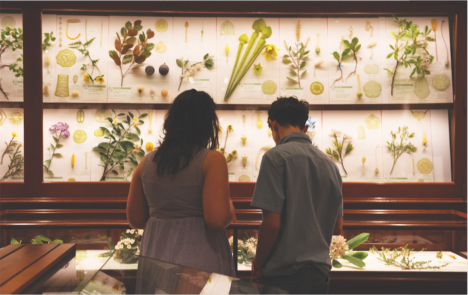 a woman on the left man on right both in silhouette in front a white framed exhibit of flowers, grasses and plants