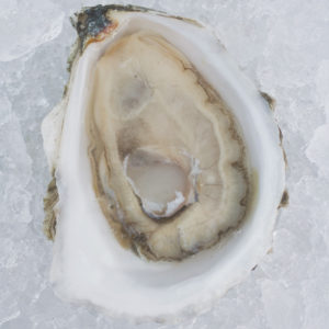 one light grey oyster open on ice