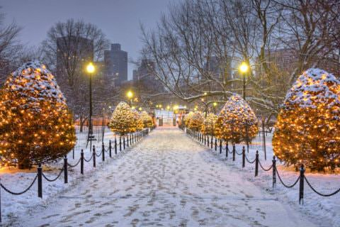 Wide snowy walkway lined with trees covered in twinkling lights, warmly lit light posts and city buildings in the background